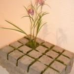 1. Platz Deko-Topfpflanze