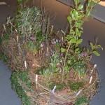 3. Platz Gefäßpflanzung